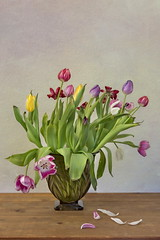 Bouquet of Tulips (suzanne~) Tags: flowers stilllife plant colors tulips indoor faded vase wilted bouquet tabletop