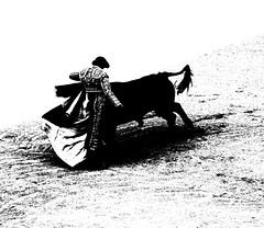 Capeando (aficion2012) Tags: bw france monochrome fight sebastian capa monotone bull bn remate toros duotone arles francia corrida toro toreador capote capea faena matador torero toreo castella capear garcigrande capeando capeador