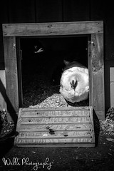 (Joshua Wells Photography) Tags: lake chicken birds animals plane army pig cow boat gun cemetary navy goat deer pigs calf antiaircraft