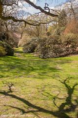IMGP1128 (acornuser) Tags: park trees blackandwhite bw reflection water woodland garden landscape waterfall spring surrey cascade virginiawater blosom sigma1770 pentaxk3