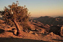 Keys View, Joshua Tree National Park, California (faungg's photos) Tags: california ca travel sunset usa mountains landscape us roadtrip    lonetree joshuatreenationalpark  nnature