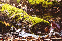 Wald (Graphic works Photografie) Tags: see laub bltter baum moos frhling weiher baumstamm