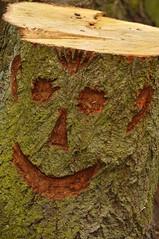 Holzkopf :-) (nirak68) Tags: tree deutschland wooden gesicht flickr lübeck baum baumstamm 107366 schleswigholsteinkreisfreiehansestadtlübeck c2016karinslinsede etwashölzernes 52wochenfotochallenge