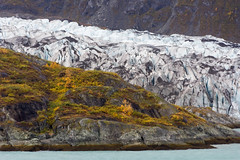 Autumn @ glacier (michael_hamburg69) Tags: autumn trees usa alaska herbst glacier gletscher indiansummer laubfrbung colouringoftheleaves