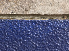 Urban nature (nofrills) Tags: blue wall insect concrete grey moss paint gray urbanfragment urbanmosaic