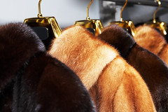 .jpg (vestidetalno) Tags: new winter brown cold beautiful beauty fashion retail modern shopping hair fur gold clothing pattern skin coat group sable style objects wear gift mink coathanger sales addiction luxury hanger tab wealth garments lifestyles