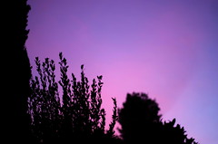 evening sky (SS) Tags: pink blue light sunset sky italy tree colors mood purple pentax silhouettes lazio k5 smcpentaxm50mmf17 ss