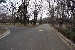 DSC02832.jpg (randy@katzenpost.de) Tags: winter japan yoyogikoen shibuyaku tkyto japanurlaub20152016