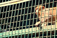 Prison Life - VII (Rafee Mizan Khan Chowdhury Niloy) Tags: people nature canon garden botanical zoo wildlife photowalk dhaka mirpur 70d
