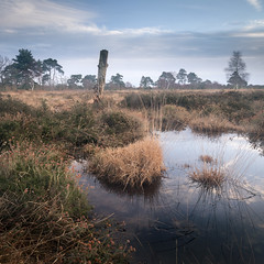 Skipwith Common (Draws_With_Light) Tags: camera winter panorama david water sunrise canon woodland season landscape eos mark yorkshire iii north hard places scene filter ii 09 lee nd vegetation 5d filters common grad marshland northyorkshire skipwith polarising polarisingfilter tse24mm skipwithcommon f35l hopley canoneos5dmarkiii tse24mmf35lii lee09ndhardgrad davidhopley