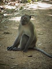 Khao Sok (Andy Kaye) Tags: park lake forest thailand monkey lan national jungle ape thani khao singe khaosok surat sok suratthani cheow maccac