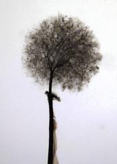 Collaria arcyrionema (Fotografa de Naturaleza de Paco Moreno Gmez) Tags: parque naturaleza fauna andaluca madera flora natural sierra troncos picos fotografa aracena humedad myxomycetes aroche myxo mixomicetes
