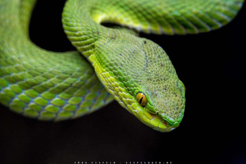 The World S Best Photos Of Schlangen And Vertebrata Flickr Hive Mind