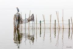 Albufera (Siurell Blr) Tags: espaa mist water valencia landscape agua paisaje aves niebla comunidadvalenciana laalbufera