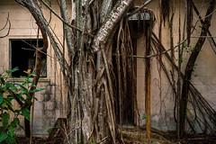Abandoned HM-40 (ArchitecturalAfterlife) Tags: urban history abandoned nature overgrown keys us florida hawk yo nike adventure forgotten urbanexploration missile exploration largo base urbanexploring urbex johnnyjoo johnnyjoophotography