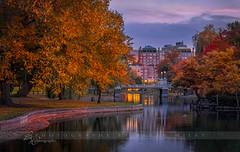 Boston Public Garden in Autumn (betty wiley) Tags: city bridge autumn fall public boston garden pond seasons massachusetts newengland beantown