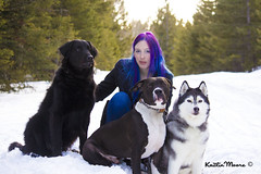 _MG_4004 (Dun By Kaitlin) Tags: winter pets snow love dogs animals forest hair fur woods husky purple pitbull shepard