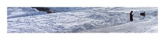 Got Mail ?   (Fairfax Station, VA) (sorrellbruce) Tags: winter snow storm cold person fuji bright january solitary isolated snowday lr6 photoninja classicchrome fujinon23mm fujixt1 thomasfitsgeraldpresets blizzard2016 colorefexpro63