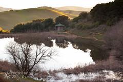 Helen Putnam Park (Photos By Michi) Tags: california sunset nature beautiful landscape pond hills fields petaluma sonomacounty helenputnumpark
