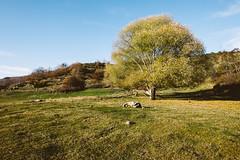 Lago di Campotosto, Loneliness (jimmomo) Tags: trees mountains alberi italia montagna abruzzo campotosto