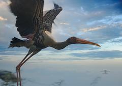 Shoot n set them free (Ram Iyer Photography) Tags: travel india bird nature birds canon asia dehi eos7d ramiyer
