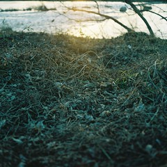 Will Change_1_ 014 (Kahori YAGI_Kahoring) Tags: light sunset shadow plants sunlight 120 film nature grass zeiss square fuji riverside jena medium pentacon p6 pentaconsix arax fujicolor czj carlzeissjena biometar pro400