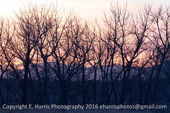 Sunset Trees and Mountains (eharrisphotos) Tags: sunset mountains colorado