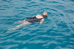 BarbadosCarribean 2016_00328 (david williams5) Tags: turtle shell barbados caribbean seaturtle cheloniamydas greenturtle carapace