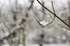 winter is back II (Frau Koriander) Tags: wood schnee trees winter snow cold tree ice nature weather forest outdoors woods dof bokeh outdoor natur wintertime äste kalt eis wald bäume treebranches baum raindrop wetter zweige kälte regentropfen hbw happybokehwednesday nikkor6028 nikond300s