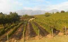 DSCN7686 (RobW_) Tags: southafrica march saturday stellenbosch westerncape 2016 05mar2016