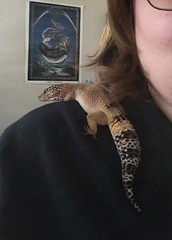 Shoulder Pet (L Westy) Tags: reptile cinder leopardgecko shoulderpet