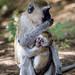 Maternal protection / Mutterschutz