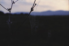 (the_analogue_me) Tags: film nature lomo lomography alba web spiderweb natura erba campo fields pelicula analogue rugiada prato analogica mattino pellicola ragnatela lomofilm niccollandi niccololandi theanalogueme