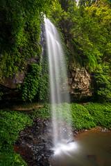 Crystal Shower Falls, Dorrigo National Park (affectatio) Tags: waterfall rainforest sony falls waterfalls nsw newsouthwales waterdrops dorrigonationalpark 1118mm crystalshowerfalls wongawalk a77mk2
