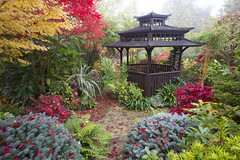 Autumn acer colours in the pagoda garden (Four Seasons Garden) Tags: uk november autumn red england colour crimson leaves garden four japanese pagoda wooden maple seasons award foliage national deciduous winning walsall 2015 acers