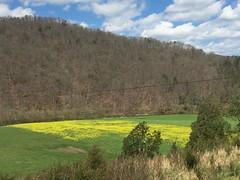 Spring in Virginia (wahoouvafan) Tags: photography virginia hiking mendota swva