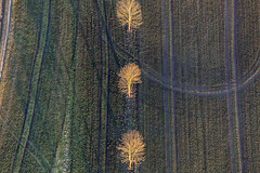 Glowing Trees (Aerial Photography) Tags: trees tree field by landscape la outdoor landwirtschaft tracks feld spuren traces row aerial line agriculture landschaft bume baum deu luftbild alignment leaftree luftaufnahme abendlicht lineoftrees bayernbavaria deutschlandgermany reihe ndb laubbaum deciduoustree ackerbau baumreihe rowoftrees foliagetree buchaerlbach fotoklausleidorfwwwleidorfde buchaerlbachlkrlandshut 16032012 1ds75968
