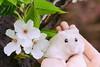 DSC_6687 (迷子昔話) Tags: pet animal hamster 宠物 动物 仓鼠