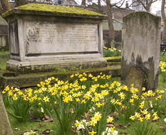Pushing up the Dafs (tcees) Tags: bunhillfields cemetery graveyard tombstones tomb graves cityroad daffodills flower gravestone london fujifilm x10