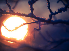 Warming Up (trm42) Tags: morning blue winter sun snow cold sunrise countryside frozen focus dof bokeh branches fields tele talvi ilmajoki 22c pohjanmaa auringonnousu pellot