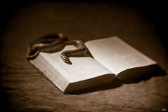 Book of Knowledge (*altglas*) Tags: monochrome sepia buch book snake bible toned bibel schlange heiligeschrift 18120 projectionlens 35kp
