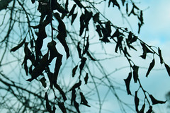 DSC_1881 (tatka5100) Tags: tree leaves natural