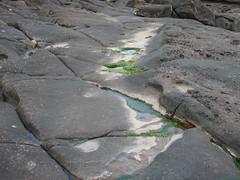 Sea Weed Pathway (Smabs Sputzer) Tags: sea see coast weed rocks wee