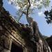 Ta Prohm, Angkor Archeological Park.