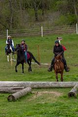 DSCF0332.jpg (Ed Traywick) Tags: horses horse leo robyn obstacles horseclinic