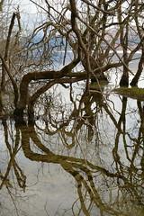 (Lakuda-san) Tags: scotland arbres reflets lochlomond ecosse luss