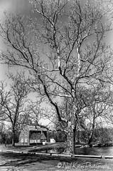 Tree scape_DSC5810 photoshop NIK edit 2  (nkatesphotography) Tags: trees nature landscape outdoors scenic streams creeks nikon1855mm graemepark nikond7000