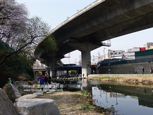 안산공원벚꽃27