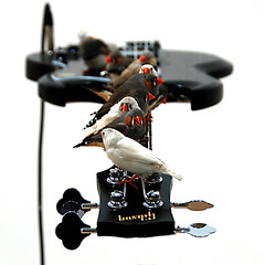the birds... (bonnevillekid) Tags: barbican 2010 clesteboursiermougenot