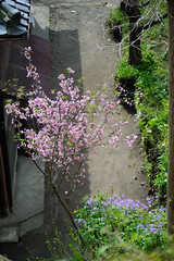 20160410-DSC_7196.jpg (d3_plus) Tags: sky plant flower history nature japan trekking walking temple nikon scenery shrine bokeh hiking kamakura fine daily bloom  28105mmf3545d nikkor    kanagawa   shintoshrine   buddhisttemple dailyphoto sanctuary   thesedays kitakamakura  28105   fineday   28105mm  holyplace historicmonuments  zoomlense ancientcity        28105mmf3545 d700 281053545 nikond700  aiafzoomnikkor28105mmf3545d 28105mmf3545af aiafnikkor28105mmf3545d